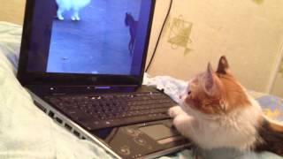Котэ смотрит кошачий фильм ужасов.