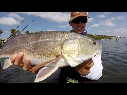 Wade Fishing For Redfish, Trout And Snook In The Indian River