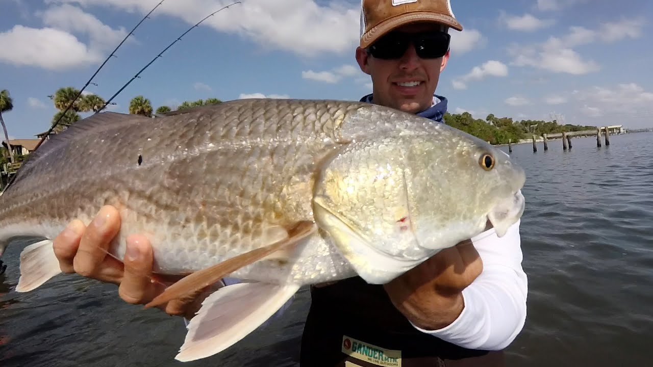 Wade fishing for redfish trout and snook in the indian for Indian river fishing