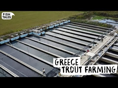How TROUT Is Farmed In Greece | Bart Van Olphen