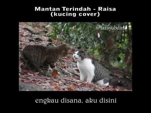 Heboh!!! Raisa - Mantan Terindah (Kucing Cover) Kucing Nyanyi Lagu Raisa - Mantan Terindah