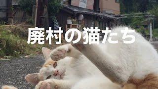 ネコ好きの皆さんお待たせしました!久しぶりのネコ動画です。 人が少な...