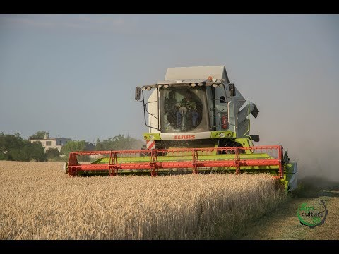 Wheat harvest 2017   Slovakia  