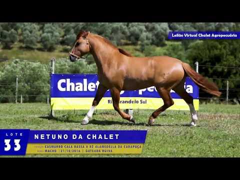 LOTE 33 - Netuno da Chalet