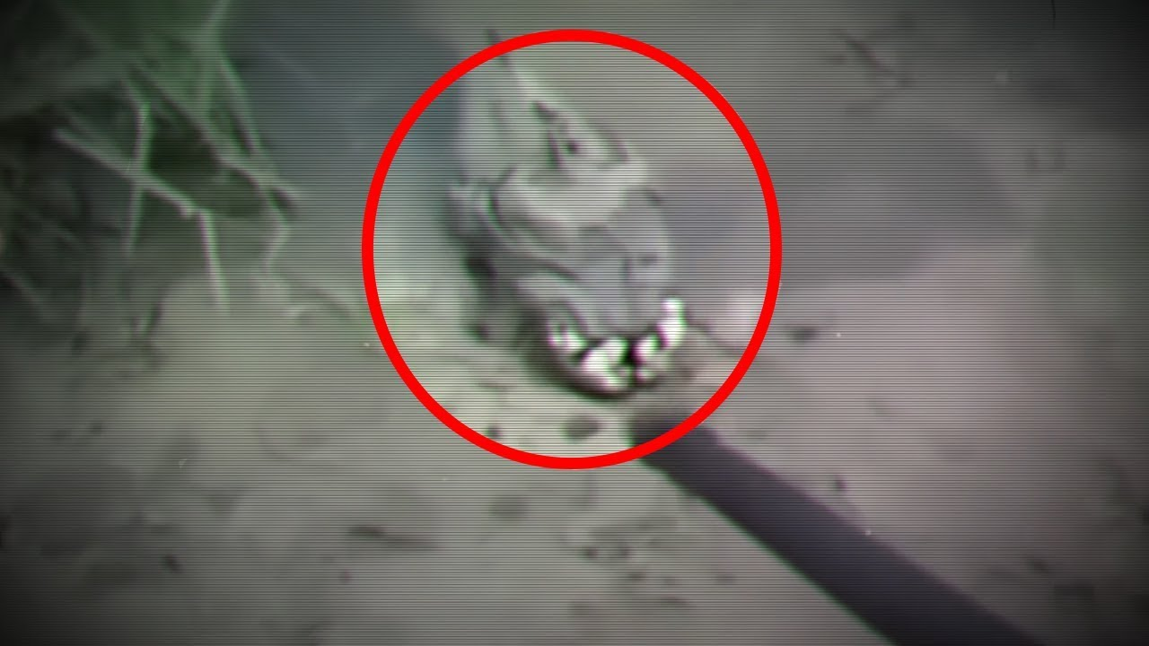 5 Mysterious Creatures Caught On Camera Amp Spotted In Real
