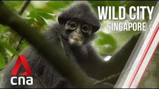 Singapore's Forest Life | Wild City | Full Episode