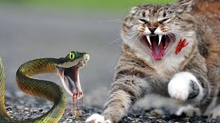 Cat Vs Snake  Adorable &  Funny Pet Reactions