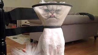 There's absolutely nothing funnier than cats - Funny cat compilation thumbnail