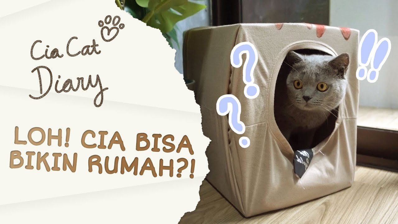 Gampang Banget! DIY Cara Membuat Rumah Kucing dari Kardus ...