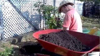 Pope John Paul 11 Rose Planting #John&Charlotte