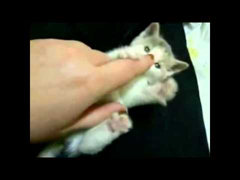 Top 10 Sweetest Kittens Ever Met On Youtube