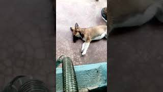 Funny dog reaction video😂😂