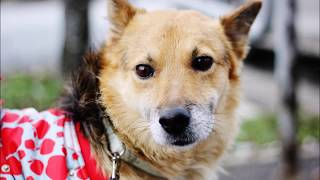 Бездомные животные: Собака Грей: удивительная история спасения бездомных животных