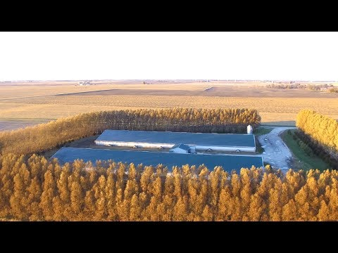 Helping Farmers Implement Fresh Landscape: Tree Buffers with Illinois Farm Bureau