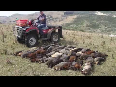 Face to Face: Otago Peninsula Biodiversity Group