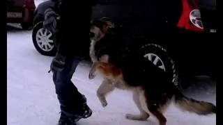Секс с человек и собака азаза