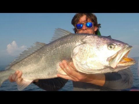 MONSTER SEA TROUT {Corvina} Catch, Clean, Cook and EAT! Tasty Tuesday
