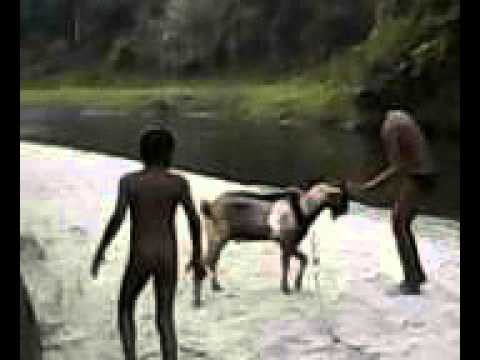 kambing VS kambing VS manusia