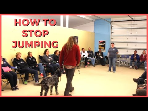 How To Stop Jumping, Do It Yourself Solid K9 Training