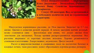Виртуальная выставка МБУК ВЦБС Редкие растения Вяземского района номинация Красная книга Смоленской