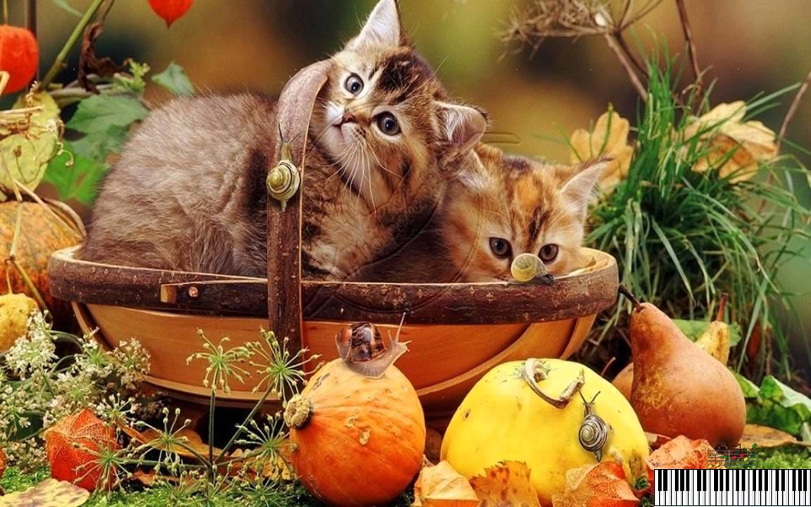 Free Fall Puppy Wallpaper Autumn Cats And Dogs Frank Mills Kitty On The Keys