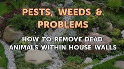 How to Remove Dead Animals Within House Walls