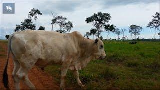 """MT registra caso suspeito de """"doença da vaca louca"""""""