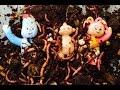 IGGLE PIGGLE, UPSY DAISY And Makka Pakka Worms and Compost!