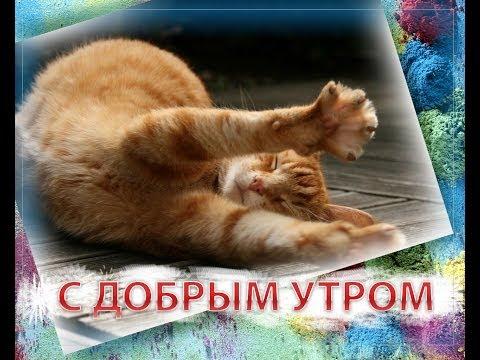 Лучшая открытка С ДОБРЫМ УТРОМ