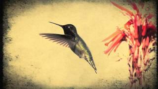 "Fleet Foxes - meadowlarks (Official james lerouge ""hummingbird"" version)"