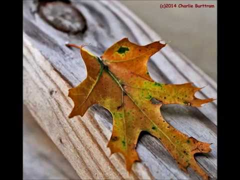 "Willie Nelson and Lee Ann Womack - ""Mendocino County Line"""