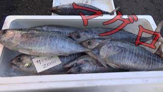【これで1000円!?】深海魚だらけの市場に行ったら楽しすぎた!
