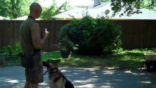 Fort Worth Dog Training | Redeeming Dogs | Kona - German Shepherd | Tod Mcvicker - Dog Trainer