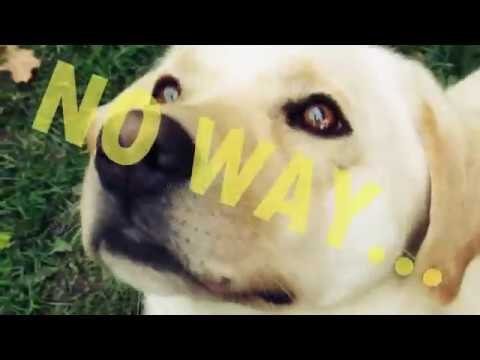 MARLEY - TONIGHT ♥ | 트릭 개를 말리 *_*