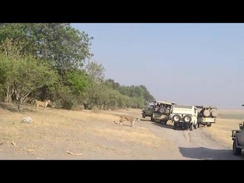 ZAMBIA // ZIMBABWE //  SOUTH AFRICA // BOTSWANA // 2017