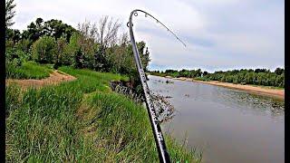 ЛЮТЫЕ поклевки!!! Рыбалка УДАЛАСЬ! Таня не жжет! Ловля карпа сазана на Ахтубе 2019