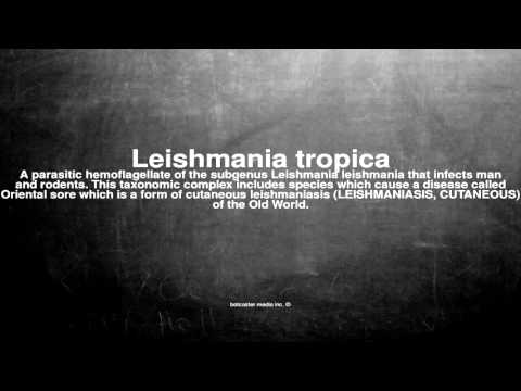 Medical vocabulary: What does Leishmania tropica mean