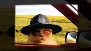 Супер приколы от домашних животных. Новое Смешное видео для детей.