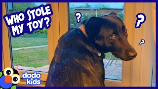 Dog Sees A Mystery Animal Playing With Her Toys Every Night | Dodo Kids