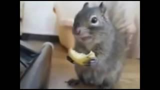Белочки типо смешно (теги: белки, смех, приколы, короткое видео)