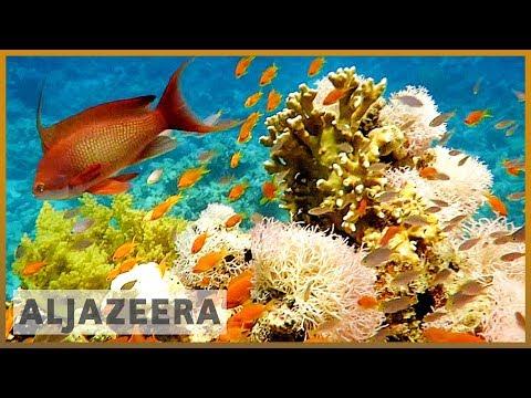 Al Jazeera English: Jordan's scientists restoring coral reefs in Red Sea