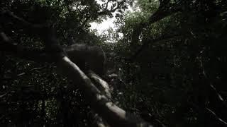 Книга джунглей//ТРЕЙЛЕР ФИЛЬМА