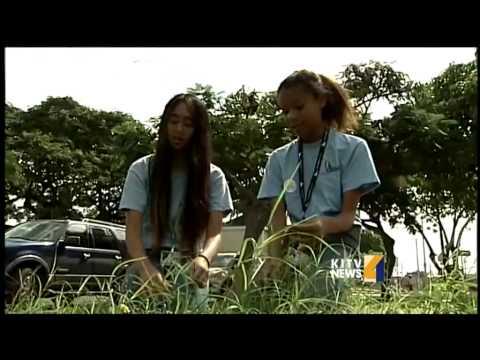 Stolen grass causes confusion at Ilima Intermediate School