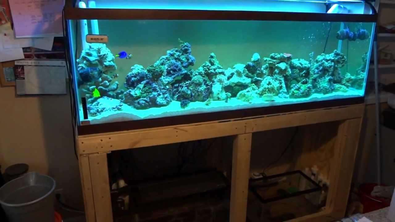125 gallon tank with refugium sump tank youtube for 125 gallon fish tank