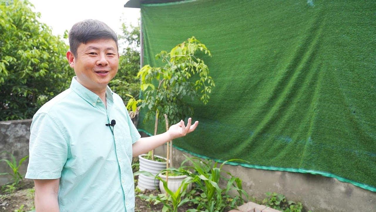 跟火哥看看屋顶菜地种了些什么?平台花园怎样改?