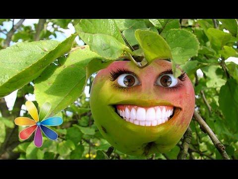 Рецепт Как правильно выбрать яблоки. Лучшие рецепты из яблок. - Лучшие советы Все буде добре