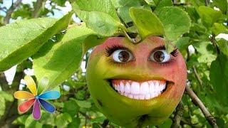 Как правильно выбрать яблоки. Лучшие рецепты из яблок. - Лучшие советы «Все буде добре»(Как правильно выбрать яблоки? Как уберечься от яблок с консервантами и пестицидами? Лучшие рецепты: квашенн..., 2014-08-13T02:00:01.000Z)