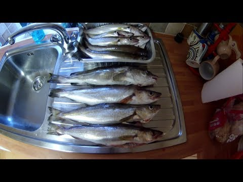 Kayak Fishing - Cornish COD And LOADS Of Whiting - Precision Anchoring