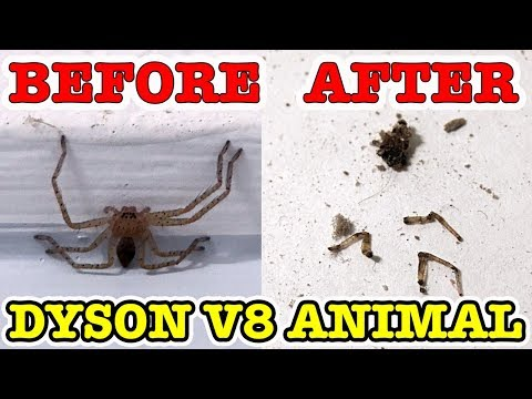 Huntsman Spider Vs Dyson V8 ANIMAL Awesome Chemical Free Pest Control - 동영상