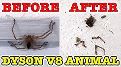 Huntsman Spider Vs Dyson V8 ANIMAL Awesome Chemical Free Pest Control